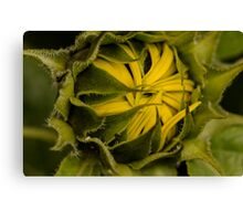 first of the season Canvas Print