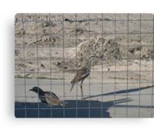 Jail Birds Canvas Print
