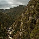 Forest Stairs walk Leven Canyon by fotosic