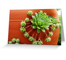 Hens and chicks 001 Greeting Card