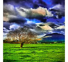 Meander Valley Tree Photographic Print