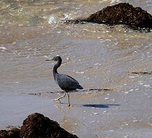 A Walk On The Beach by Noel Elliot