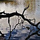 Sanctuary Lake. by Jeanette Varcoe.