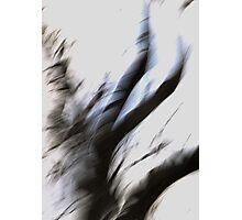 DeadWood Photographic Print