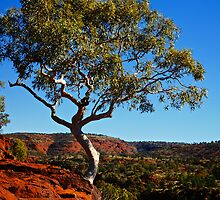 Lonely Snow Gum by D-GaP