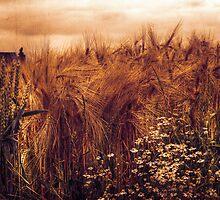 A rural view by radonracer