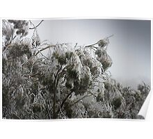 Gum Tree frost Poster
