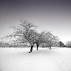 Stray Trees in Winter by eatsleepdesign