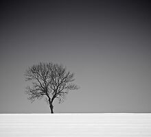 Lone Tree in Winter by eatsleepdesign
