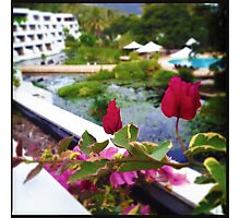 Bougainvillea Patch Photographic Print