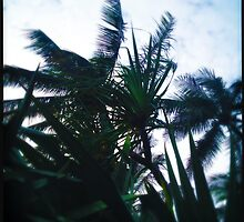 Wind by Niki Smallwood