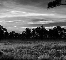 Early morning by John Sluder