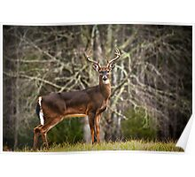 White Tailed Deer Eight Point Buck Poster