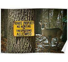No Hunting Sign and Whitetail Buck Poster