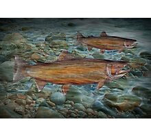 Steelhead Trout Migration in Fall Photographic Print