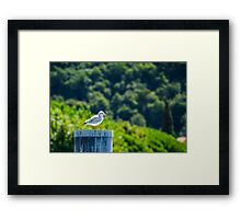 White bird Framed Print
