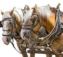 A Team of Heavy Work Horses by Randall Nyhof