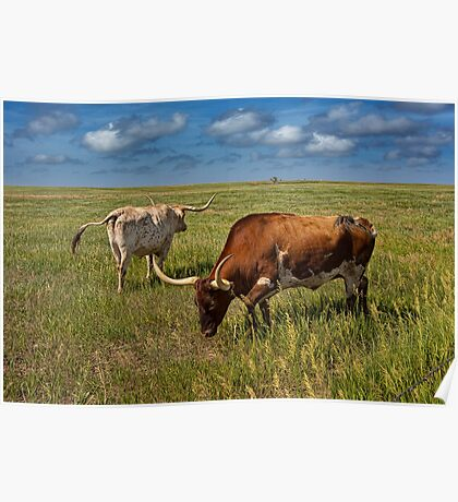 Longhorns on the Prairie Poster
