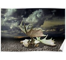Moose Skull on Parched Earth Poster