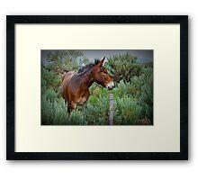 Mule in Wyoming Framed Print