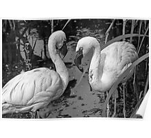 Two Pink Flamingos in Monochrome Poster