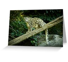 Snow Leopard on the Prowl Greeting Card