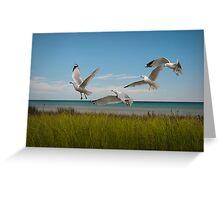 Gulls by a Lake Michigan Shore Greeting Card