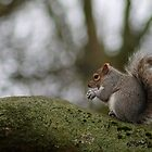 Squirrel Nutkin by rubyrainbow