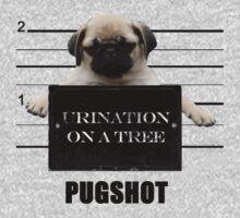 Pugshot by stevebluey