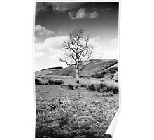 Tree from the Southern Upland Way, Scottish Borders Poster
