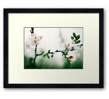 Blossom II. Framed Print
