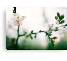 Blossom II. Canvas Print