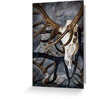 Elk Skull Art with Rack Greeting Card