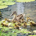 Mallard Family by KBritt