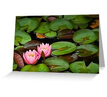 Lily Pads with Blossoms No 201 Greeting Card