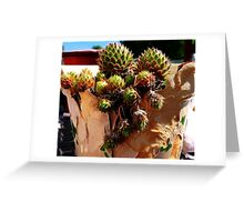 Hens and chicks in a broken pot Greeting Card