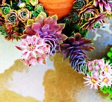Blooming hens and chicks 2 by rondo620