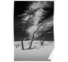 Black and White Photograph of Silver Lake Dune with Dead Trees and Cirrus Clouds Poster