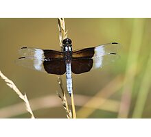 Brown Dragonfly Photographic Print