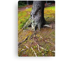 Root System Canvas Print