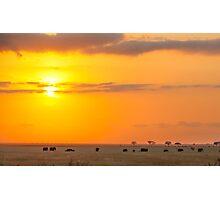 Sunrise of the Elephants  Photographic Print