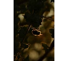 silhouette Bee! Photographic Print