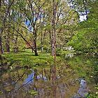 Malmsbury Botanical Gardens, Victoria, Australia by haymelter