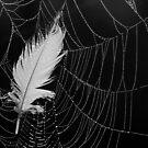 27.7.2013: Feather in Cobweb by Petri Volanen