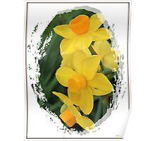 Daffodil in Winter Poster