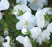 White Flowers in the Garden by Loisb