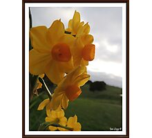 Daffodil Beauty Photographic Print
