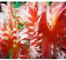 Rhododendron III. by Zuzana Vajdova