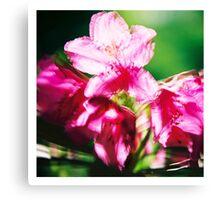 Rhododendron II. (square) Canvas Print