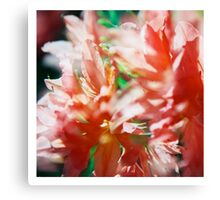 Rhododendron III. (square) Canvas Print